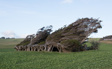 Slope Point New Zealand Trees taken in 2015