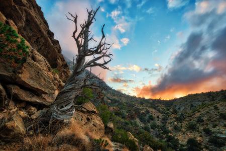 Dead Tree, Al Hajar Mountains in Oman taken in 2015