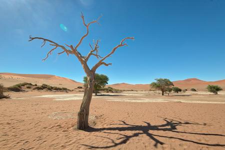 Dead Vlei in Naukluft National Park, Namibia, taken in January 2018 Imagens