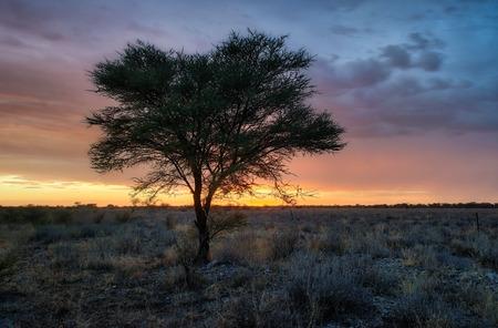 Lonely Tree in the Namib Desert taken in January 2018 Standard-Bild