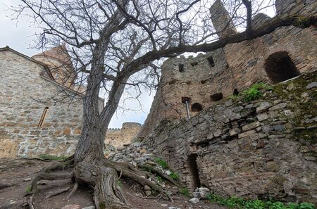 Old Tree with Distinct Roots in the Ananuri Fortress Complex Imagens