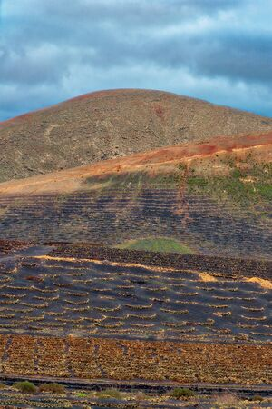 Volcano vineyards growing grapes in Lanzarote, Canary Islands, post processed in HDR