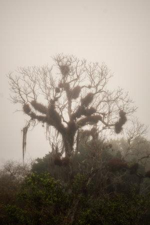 Tree in the jungle of Guatemala near Tikal, post processed using exposure bracketing