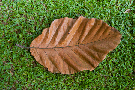 hoja seca de color marrón de cerca en el fondo de la hierba verde