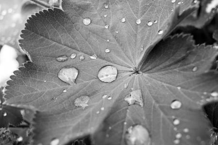 saxony: Leaf with waterdrops - Saxony, Germany Stock Photo
