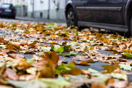 Danger of slipping by wet autumn foliage