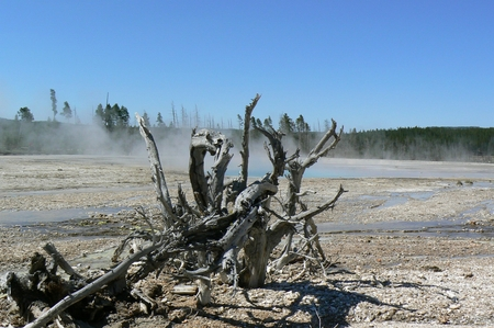 Tree stump in Yellowstone National Park