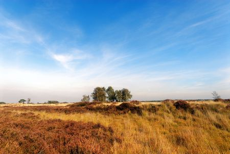 heathland: yellow and brown heathland and sky with some twirling clouds