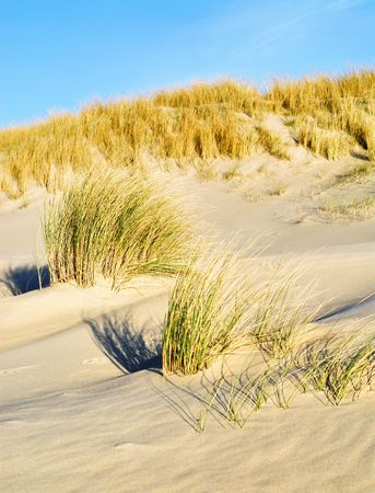 wavy grass and sand along the sea