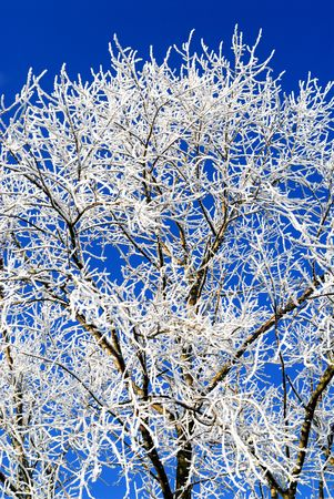 frost rime on branches of a tree Stock Photo - 4269436
