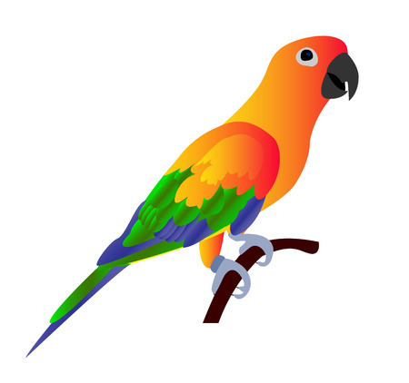 macaw parrot: Beautiful colorful parrot isolated on white background- vector illustration