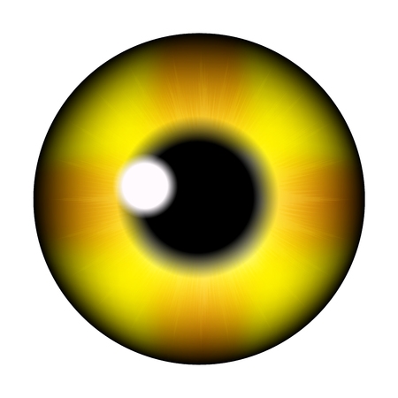 eye ball: The pupil of the eye, eye ball. Realistic vector illustration isolated on white background.