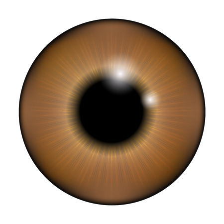 brown eyes: The pupil of the eye, eye ball. Realistic vector illustration isolated on white background.