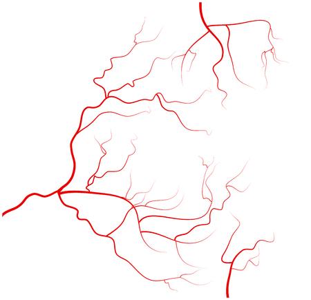 vasos sanguineos: Conjunto de las venas de los ojos humanos, los vasos sanguíneos rojos, sistema sanguíneo. Ilustración del vector aislado en el fondo blanco