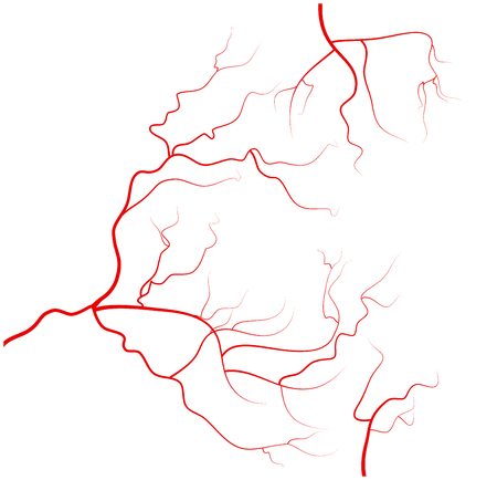 veins: Set of human eye veins, red blood vessels, blood system.  Vector illustration isolated on white background