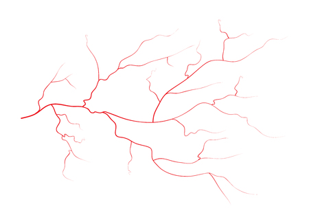 human eye: Set of human eye veins, red blood vessels, blood system.  Vector illustration isolated on white background