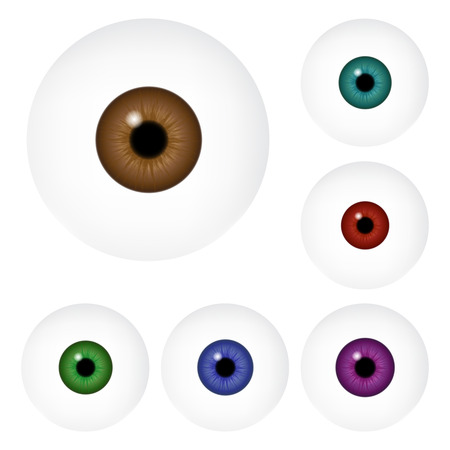 iris: Image of realistic human eye ball with colorful pupil, iris. Vector illustration isolated on white background. Illustration