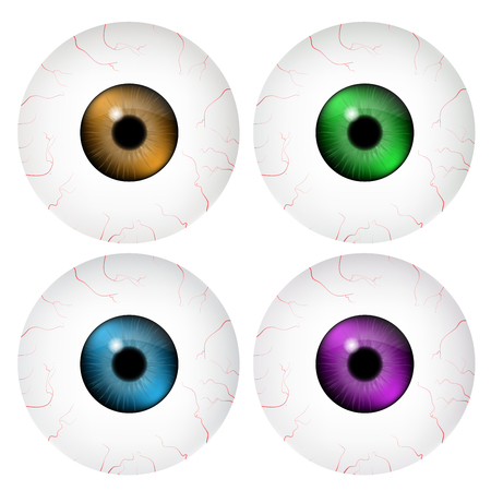 eye ball: Image of realistic human eye ball with colorful pupil, iris. Vector illustration isolated on white background. Illustration