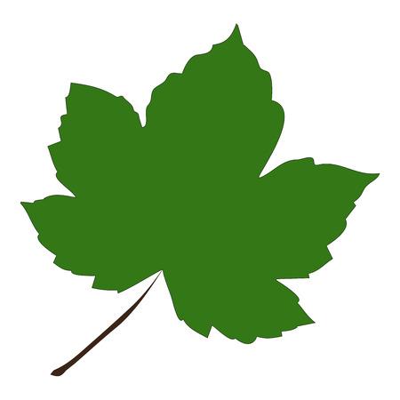 Image of cartoon maple leaf . Vector illustration isolated on white background. Stok Fotoğraf - 45909868