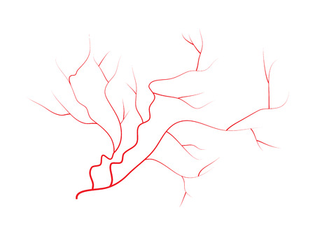 vessels: eye veins, human red blood vessels, blood system.  Vector illustration isolated on white background