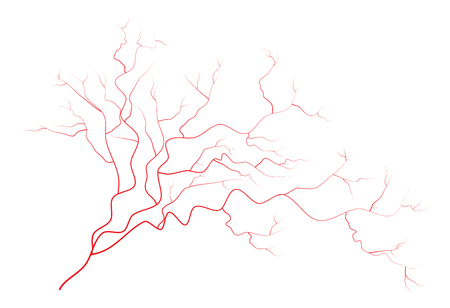 blood vessels: eye veins, human red blood vessels, blood system.  Vector illustration isolated on white background