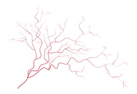 vasos sanguineos: venas, vasos sangu�neos de los ojos rojos humanos, sistema sangu�neo. Ilustraci�n del vector aislado en el fondo blanco
