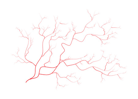 eye red: eye veins, human red blood vessels, blood system.  Vector illustration isolated on white background