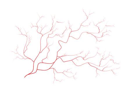 vasos sanguineos: venas, vasos sanguíneos de los ojos rojos humanos, sistema sanguíneo. Ilustración del vector aislado en el fondo blanco