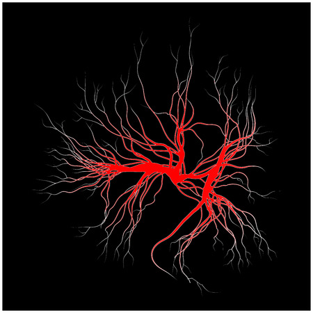 vessels: human veins, red blood vessels design. Vector illustration isolated on white background