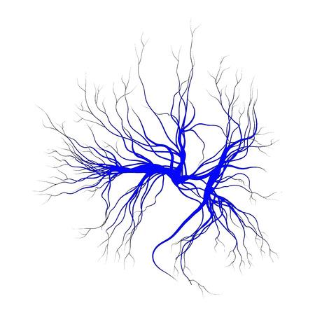 vene umane, rosso vasi sanguigni design. Vettoriale illustrazione isolato su sfondo bianco