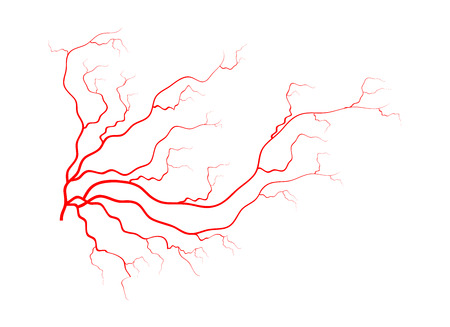 blood vessels: human veins, red blood vessels design. Vector illustration isolated on white background