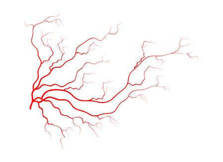 menschlichen Adern, rote Blutgefäße Design. Vektor-Illustration isoliert auf weißem Hintergrund