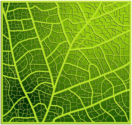 veins: leaf texture, veins vector background design. Beautiful illustration ready to use Illustration