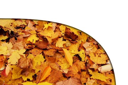 empty space: autumn leaves card banner with white empty space photo. Beautiful picture, background, wallpaper