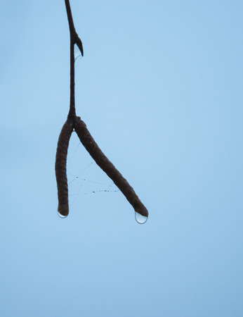 wet wallpaper: Water drop and wet spider web on branch photo. Beautiful picture, background, wallpaper   Stock Photo