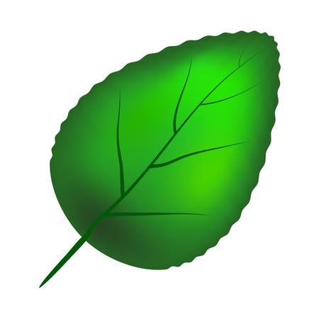 green leaf  vector symbol icon design. Beautiful illustration isolated on white background