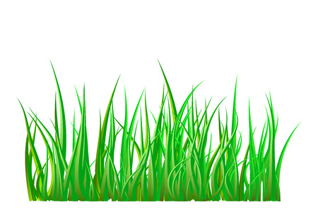 lush foliage: Green grass isolated vector symbol icon design. Beautiful illustration isolated on white background