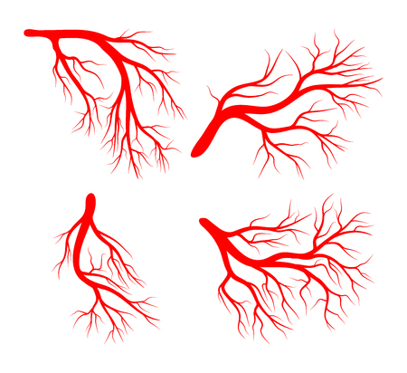 arterial: Human vein set vector icon design icon. Beautiful illustration isolated on white background
