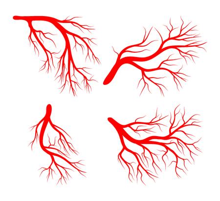 Menselijke ader ingesteld vector pictogram ontwerp pictogram. Mooie illustratie die op witte achtergrond wordt geïsoleerd Stockfoto - 79876916