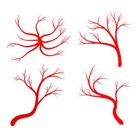 arterial: Human vein set vector symbol icon design. Beautiful illustration isolated on white background