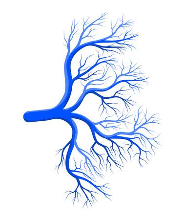 Disegno di icona del simbolo del vettore blu del vaso umano. Bella illustrazione isolato su sfondo bianco Archivio Fotografico - 79811436