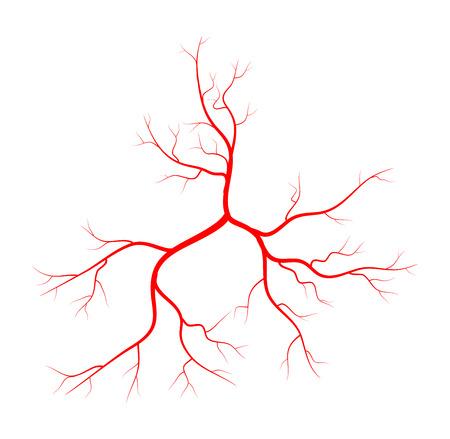 arterial: Human vein, vessel vector symbol icon design. Beautiful illustration isolated on white background Illustration