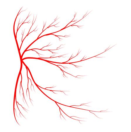 붉은 정맥은 흰색 배경에 고립 된 벡터 기호 아이콘 디자인을 설정