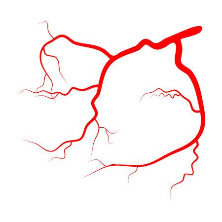 arterial: Eye vein vector symbol icon design isolated on white background