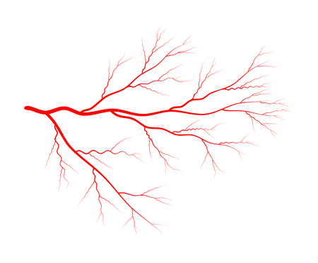 vein blood system vector symbol icon design. Beautiful illustration isolated on white background Vettoriali