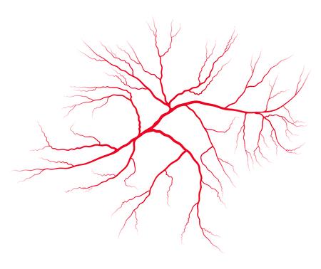 sistema de sangre de la vena símbolo del vector de diseño del icono. Hermosa ilustración aislada sobre fondo blanco Ilustración de vector
