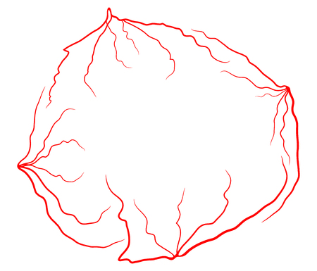 eye vein vector symbol icon design. Beautiful illustration isolated on white background