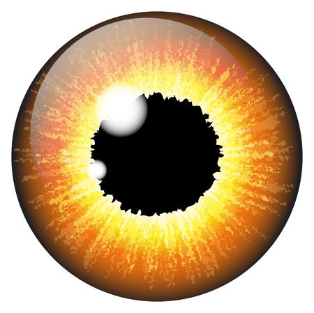 retina: Orange, hazel  iris eye realistic  vector set design isolated on white background