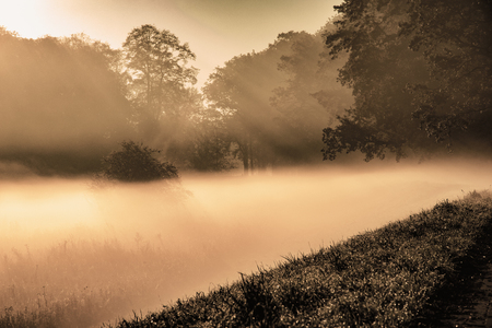 mysterious thick fog landscape on tree background