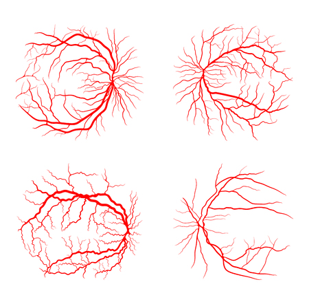 eye vein set system x ray angiography vector design isolated on white Vector Illustration